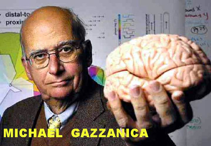 Gazzaniga_1