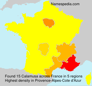 Calamusa
