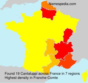 Cantaluppi