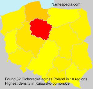 Cichoracka