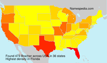 Surname Bracher in USA
