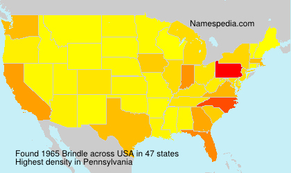 Familiennamen Brindle - USA