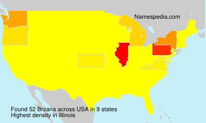 Brzana - USA